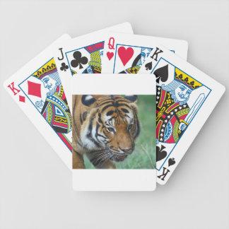 Jogos De Baralhos Fim-acima do tigre do Malay dos alugueres
