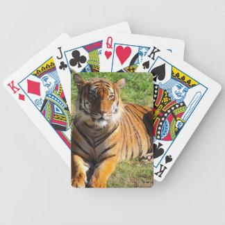 Jogos De Baralhos Tigre Malayan dos alugueres