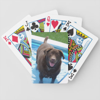 Jogos De Cartas Chocolate Labrador que tem o divertimento em uma