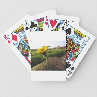 Jogos De Cartas Wildflower amarelo que cresce em pedras no por do