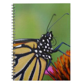 Jornal da borboleta de monarca cadernos