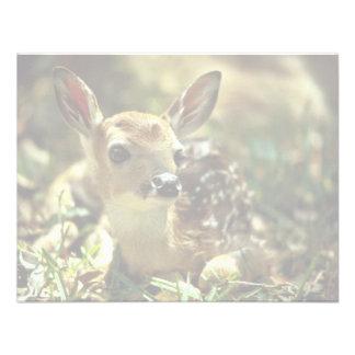 jovem corça Branco-atada dos cervos Convite