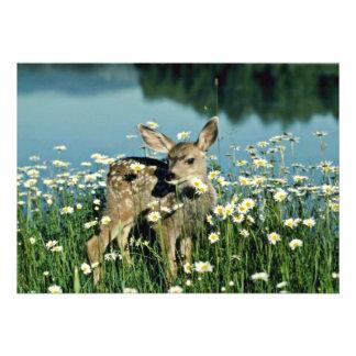 Jovem corça Cervo-nova da mula no campo de margari Convites Personalizado