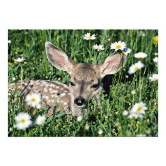 Jovem corça Cervo-nova da mula que encontra-se no  Convites Personalizados