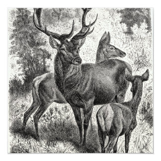 Jovem corça da gama do veado da ilustração do convite quadrado 13.35 x 13.35cm