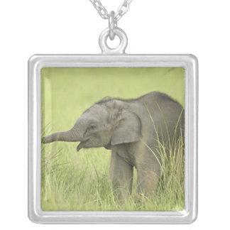 Jovens um elefante indiano/asiático, Corbett Colar Com Pendente Quadrado