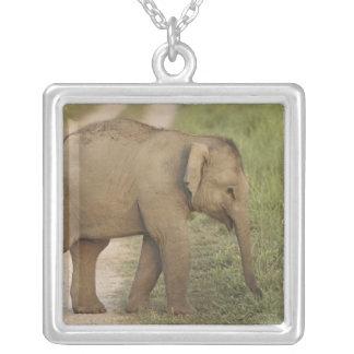 Jovens um elefante indiano/asiático no colar com pendente quadrado