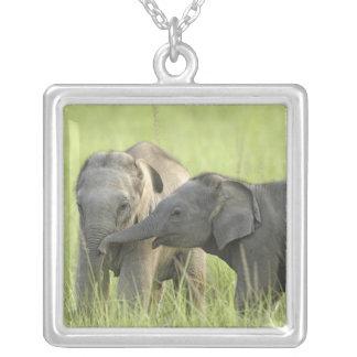 Jovens uns elefante indiano/asiático colar com pendente quadrado