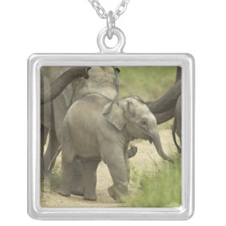 Jovens uns elefante indiano/asiático no colar com pendente quadrado