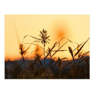 Juncos no cartão da luz do por do sol