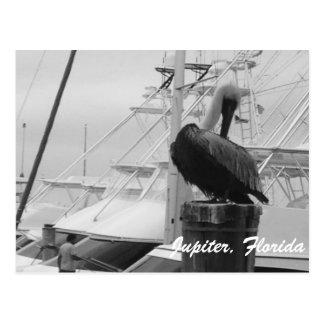 Jupiter, cartão da foto do pelicano de Florida