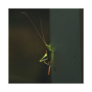 Katydid, lona envolvida impressão em canvas