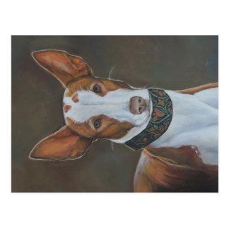 Kenzie o cartão da arte do cão de cão de Ibizan