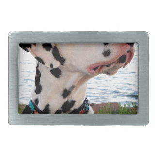 Kevin o Dalmatian