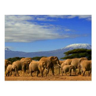 Kilimanjaro e elefantes cartão postal