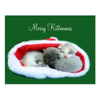 Kittenmas alegre cartão postal