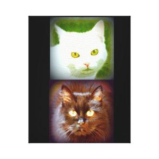 kittycats brancos/pretos