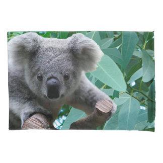 Koala e eucalipto