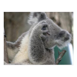 Koala QLD Austrália do cartão