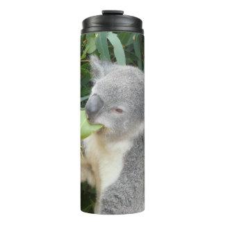 Koala que come a folha da goma