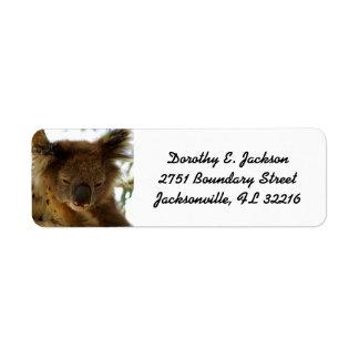 Koala selvagem que dorme no eucalipto, endereço do etiqueta endereço de retorno