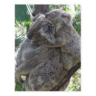 Koalas QLD Austrália do cartão