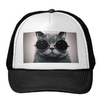 kool legal kat do gato com máscaras bonés