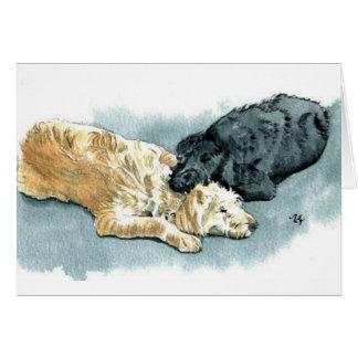 Labradoodles no cartão do amor