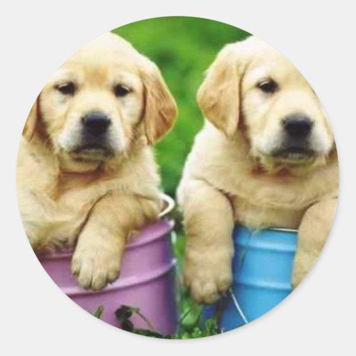 Labrador persegue puppys angie adesivo