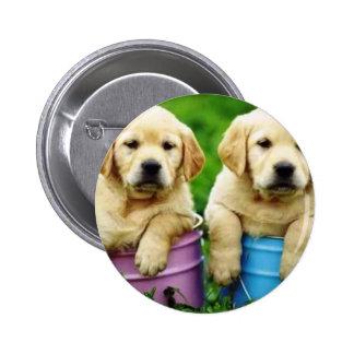 Labrador persegue puppys angie botons