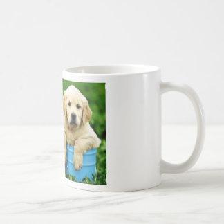 Labrador persegue puppys angie caneca