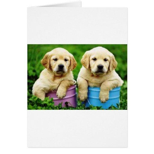 Labrador persegue puppys angie cartoes
