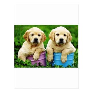 Labrador persegue puppys angie cartão postal