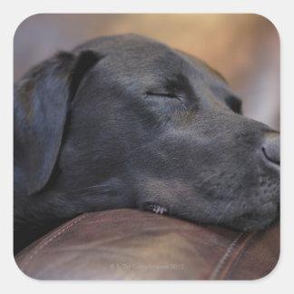 Labrador preto adormecido no sofá, fim-acima adesivo em forma quadrada