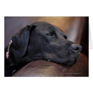Labrador preto adormecido no sofá, fim-acima cartão comemorativo