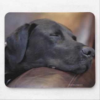 Labrador preto adormecido no sofá, fim-acima mouse pad