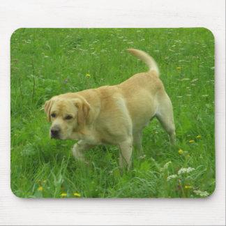 Labrador que anda na grama mouse pad