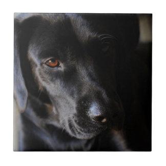 Labrador retriever azulejo quadrado pequeno