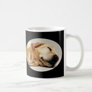 Labrador retriever e caneca do gato