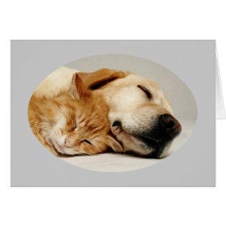Labrador retriever e cartão do gato