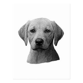Labrador retriever - imagem de Sylized - adicionam Cartão Postal