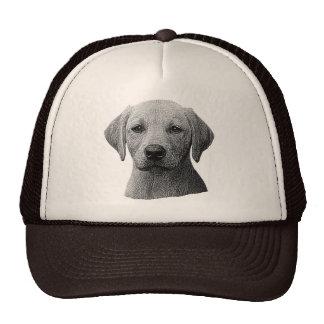 Labrador retriever - imagem de Sylized - adicionam Boné
