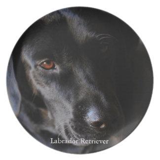 Labrador retriever louça de jantar