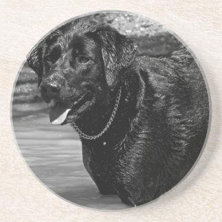 Labrador retriever na água porta copos de arenito