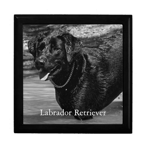 Labrador retriever na água porta jóia