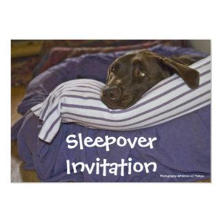 Labrador retriever na cama convites