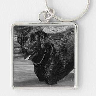 Labrador retriever no chaveiro da água