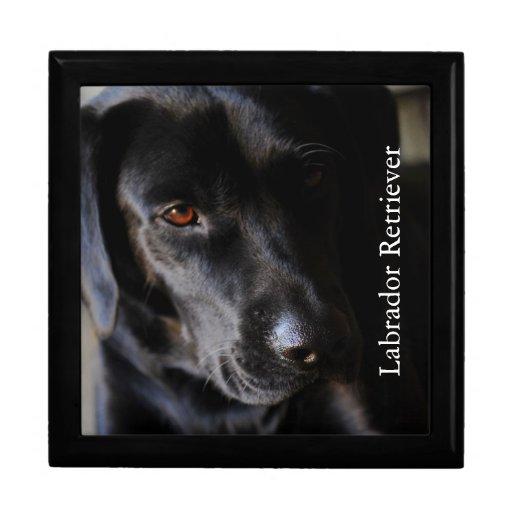 Labrador retriever porta trecos