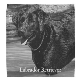 Labrador retriever preto na água bandana
