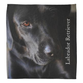 Labrador retriever preto pano para cabeça